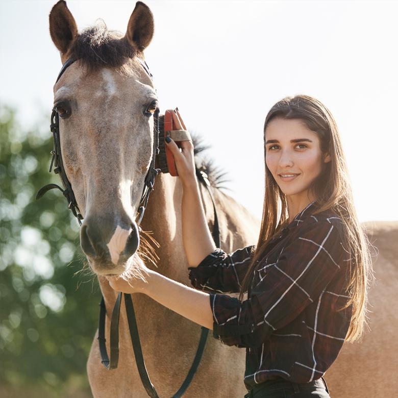 Blog des chevaux
