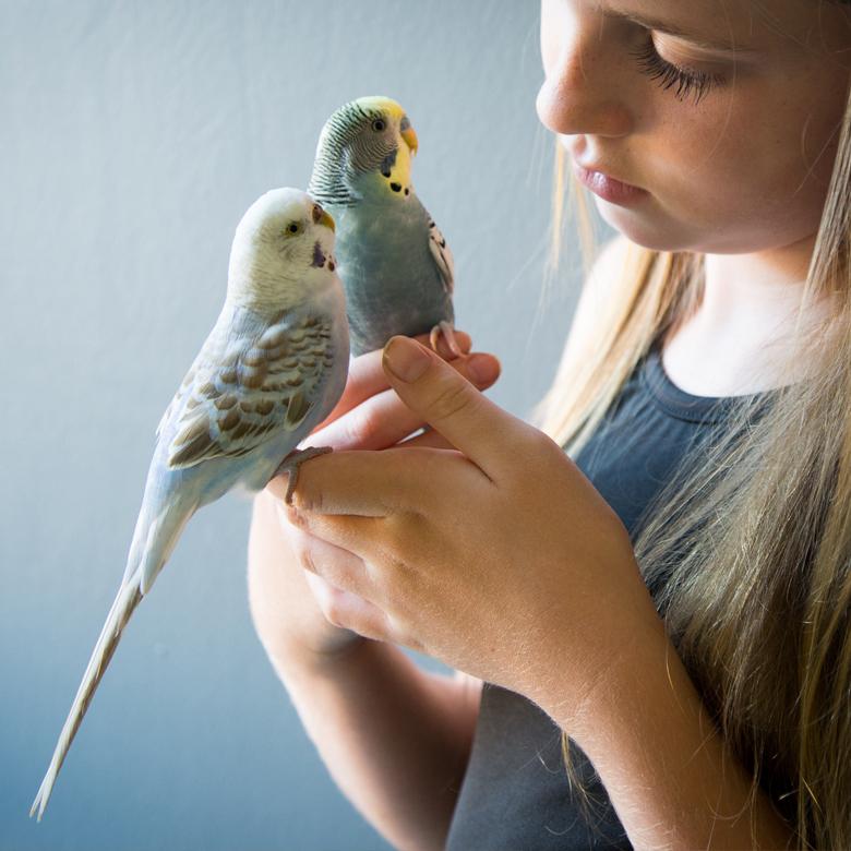 Blog des oiseaux