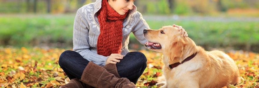 bases de l'education canine