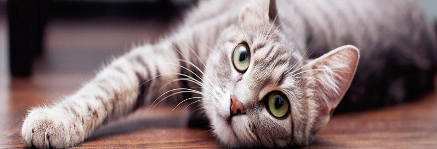 l adoption d'un chaton