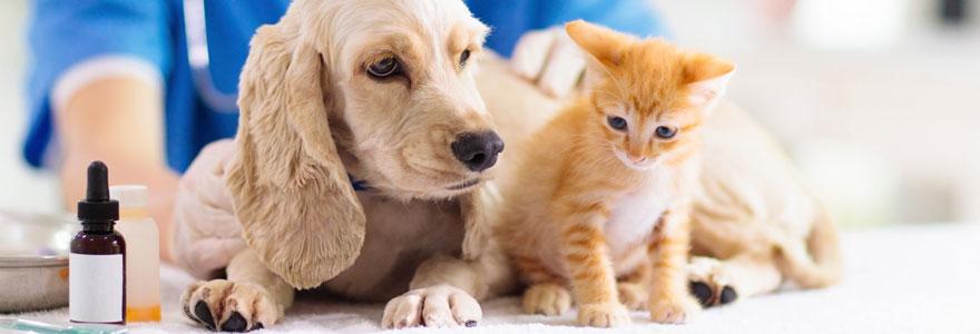 Clinique vétérinaire de garde